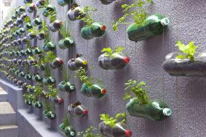 Trồng rau trên sân thượng, ban công bằng chai nhựa